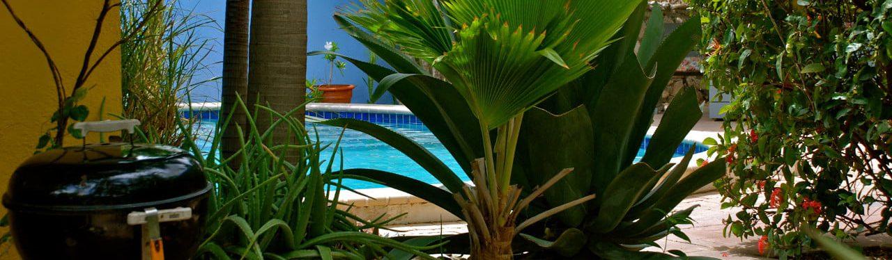 Caribbean Flower Appartementen Curacao | Zwembad ...